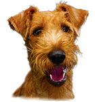 We Love Irish Terriers