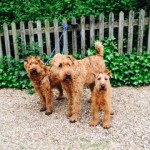 Tilly, Paddy and Monty