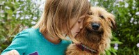 photo of an irish terrier