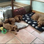 Karma's puppies