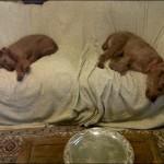 Liberty asleep with Tess