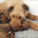 Susie Bartley and the pups