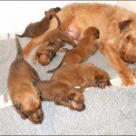 Susie, Bartley and the pups