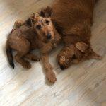 Dolly & Winston